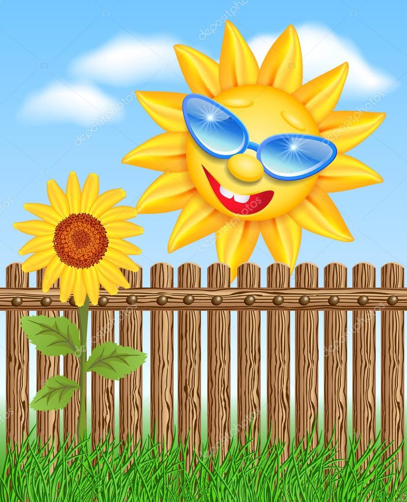 Sun peeks out from a fence and looks at sunflowers