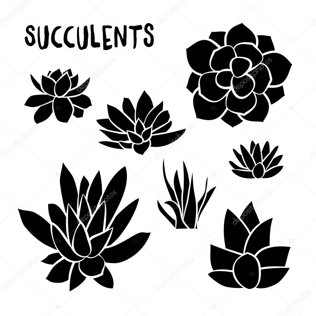 Graphic Set of succulents isolated on white background for design of cards, invitations