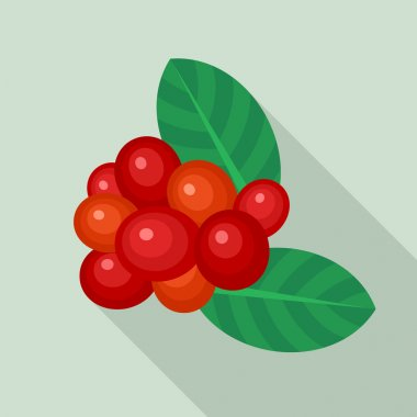 Coffee berries icon