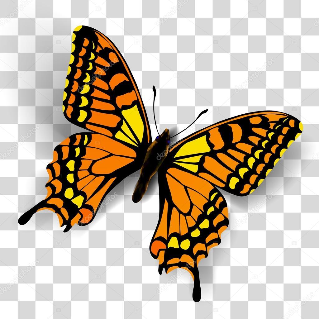 картинка на прозрачном фоне бабочка