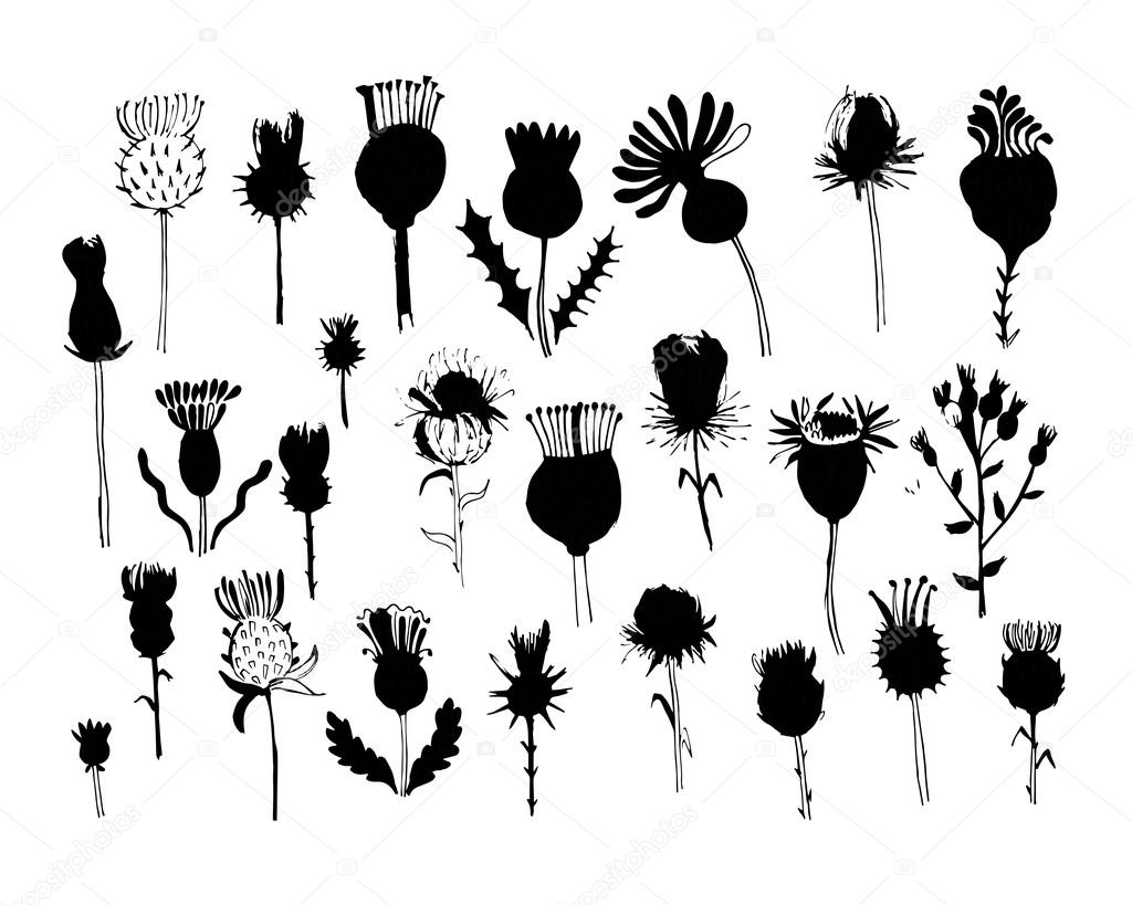 Agrimony plants collection, sketch for your design