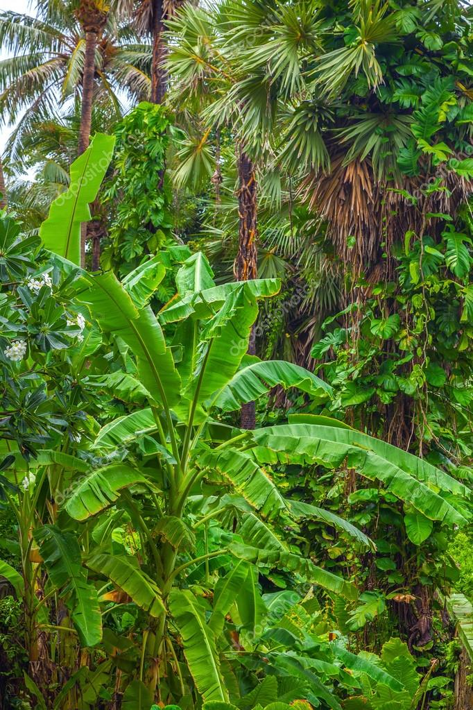 Follaje de la jungla tropical Fotos de Stock Winston 108518206