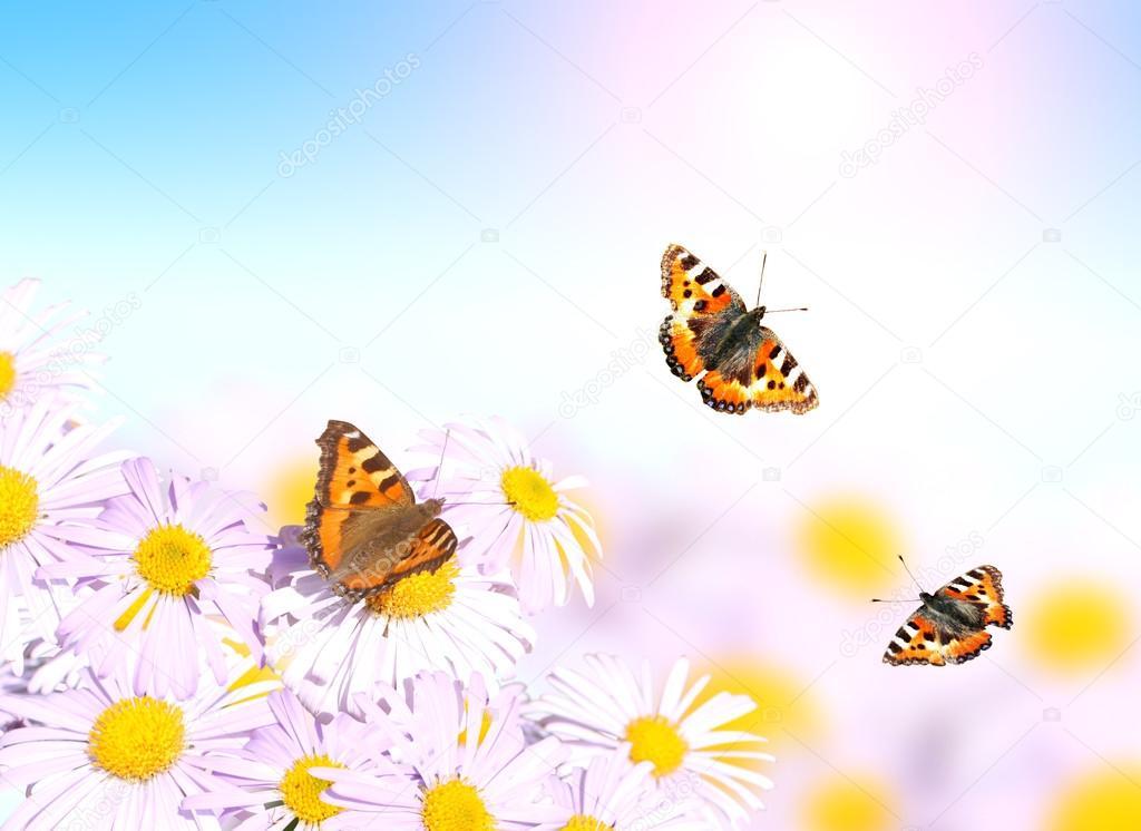 schmetterlinge fliegen ber die blumen stockfoto