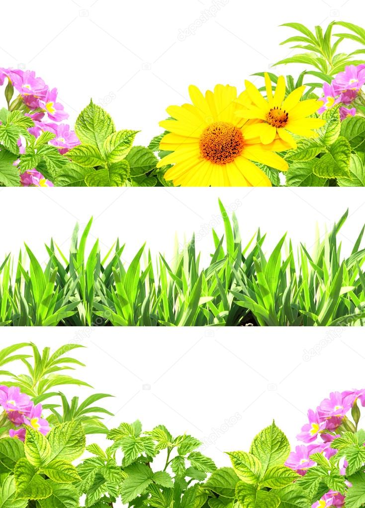 Frames with summer flowers and green grass — Stock Photo © frenta ...