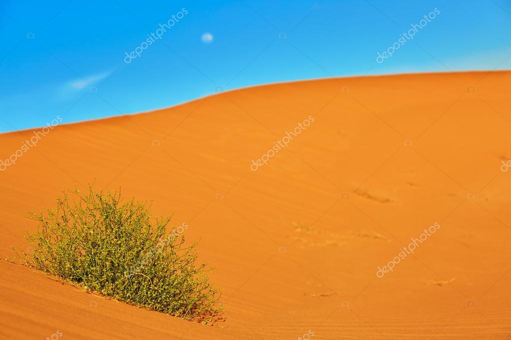vertes qui poussent dans les dunes de sable — photo #73817327