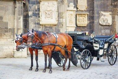 Horse-driven carriage in Vienna, Austria