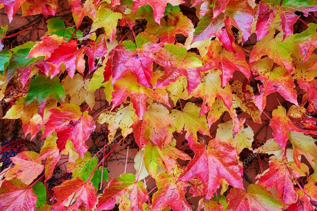 Background image of autumn leaves