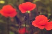 Fényképek a mező virág