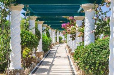 Pergola. Sources Kallithea (Terme Kalithea). Rhodes Island. Gree