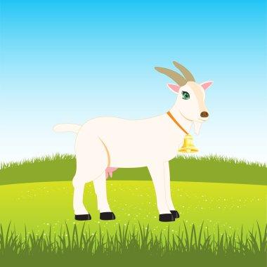 Nanny goat on field