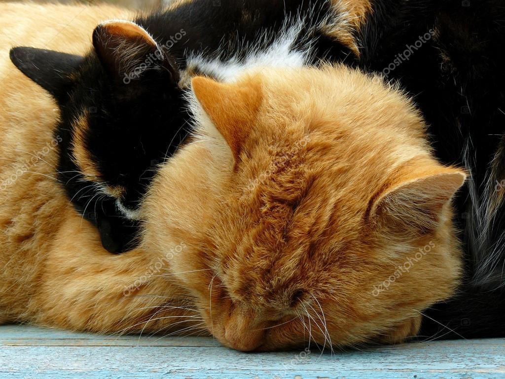 Autumnal cats