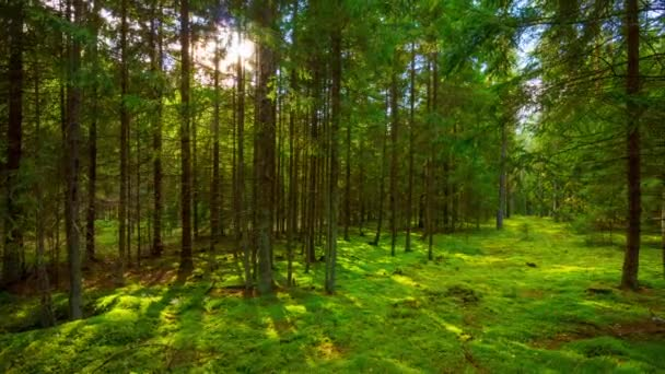 letní lesní a slunce, time-lapse