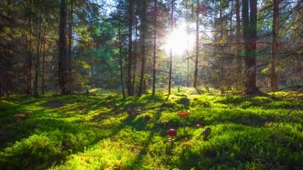 kouzelný les a muchomůrky, časosběrné s jeřábem