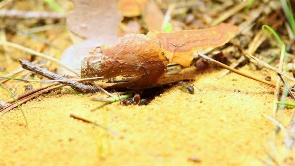 mravenci, budování mraveniště, vzít si písek
