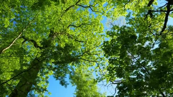Zöld erdő, panoráma