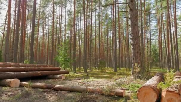Felled tree trunks in the forest