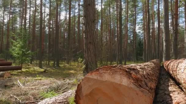 Leesett fatörzsek az erdőben