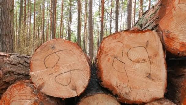kmeny pokácených stromů v lese