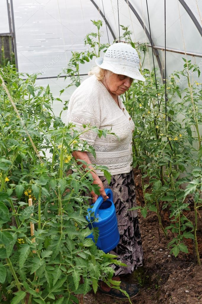 Grandma is watering tomatoes