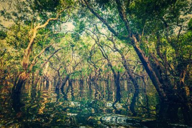 Vintage retro effect filtered hipster style image of flooded trees in mangrove rain forest. Kampong Phluk village. Cambodia stock vector