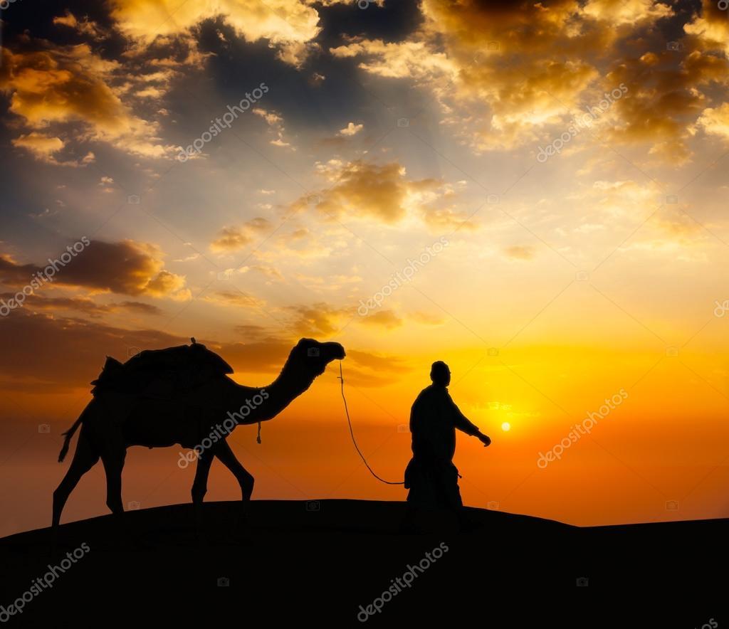 Cameleer camel driver with camels in desert dunes