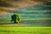 Photo Lonely tree in ploughed field