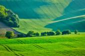 Photo Rolling summer landscape of Moravia