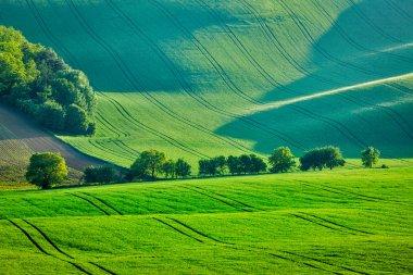 Rolling summer landscape of Moravia