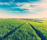 Photo Green fields of Moravia