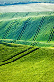 Photo Rolling landscape of  South Moravia