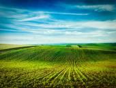 Photo Rolling fields of Moravia