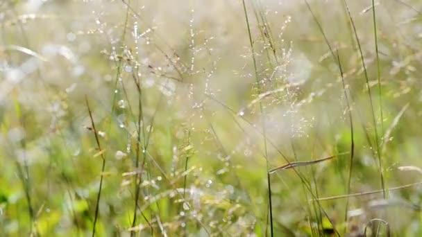 Silver morning meadow