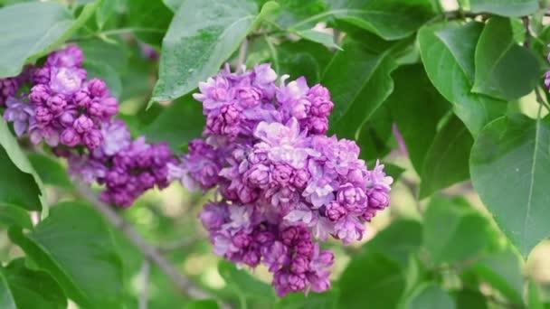 květy pozadí