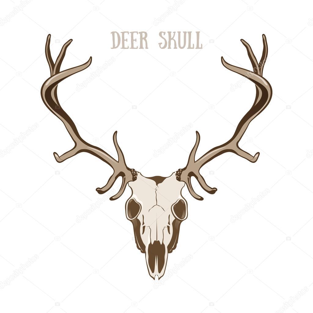 cráneo de ciervo — Vector de stock © Bienchen #73693435