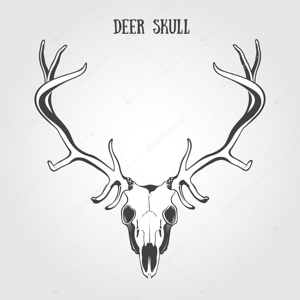 cráneo de ciervo — Vector de stock © Bienchen #73693477