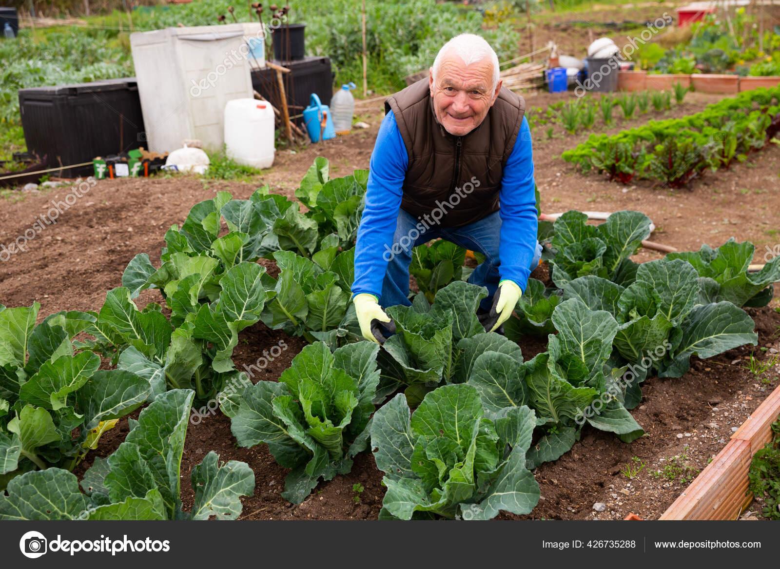 свинорылы выращивают людей для еды