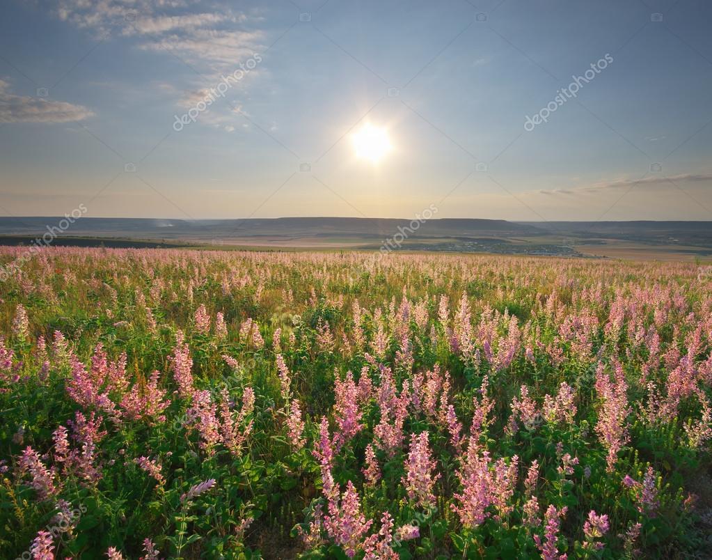 Prato di fiori di primavera. composizione della natura — Foto ...