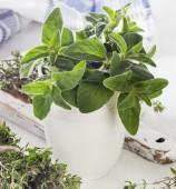 čerstvé zelené bylinky
