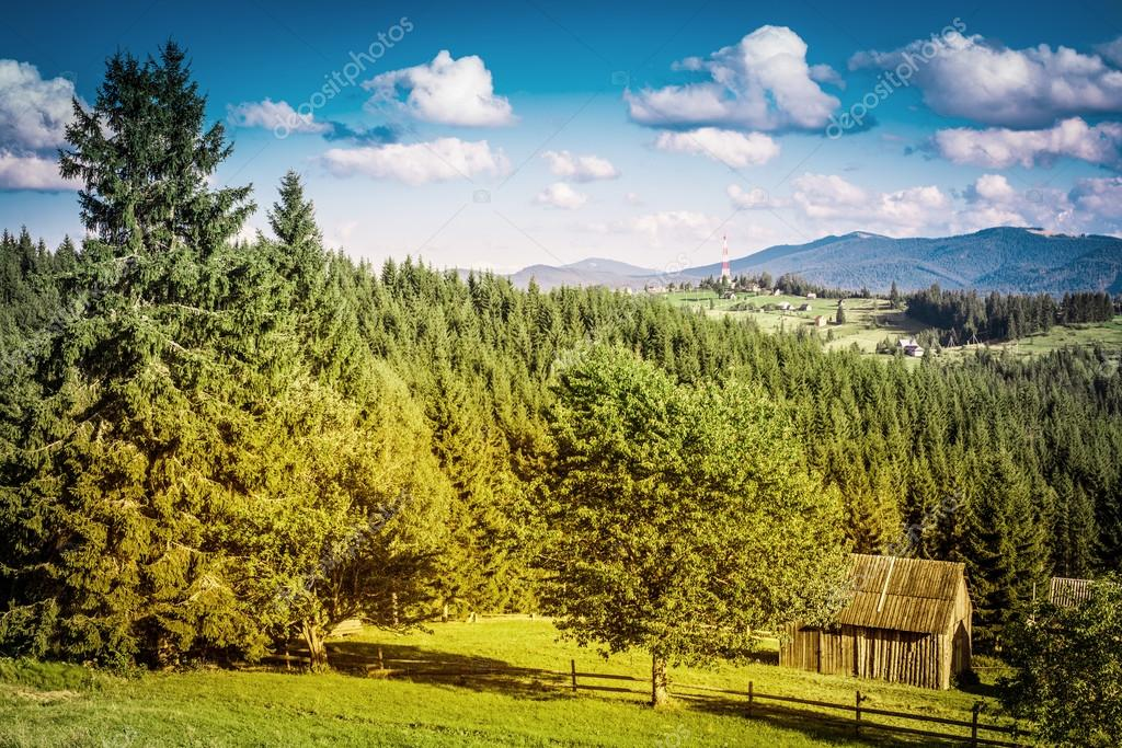 Summer day in Carpathian mountain