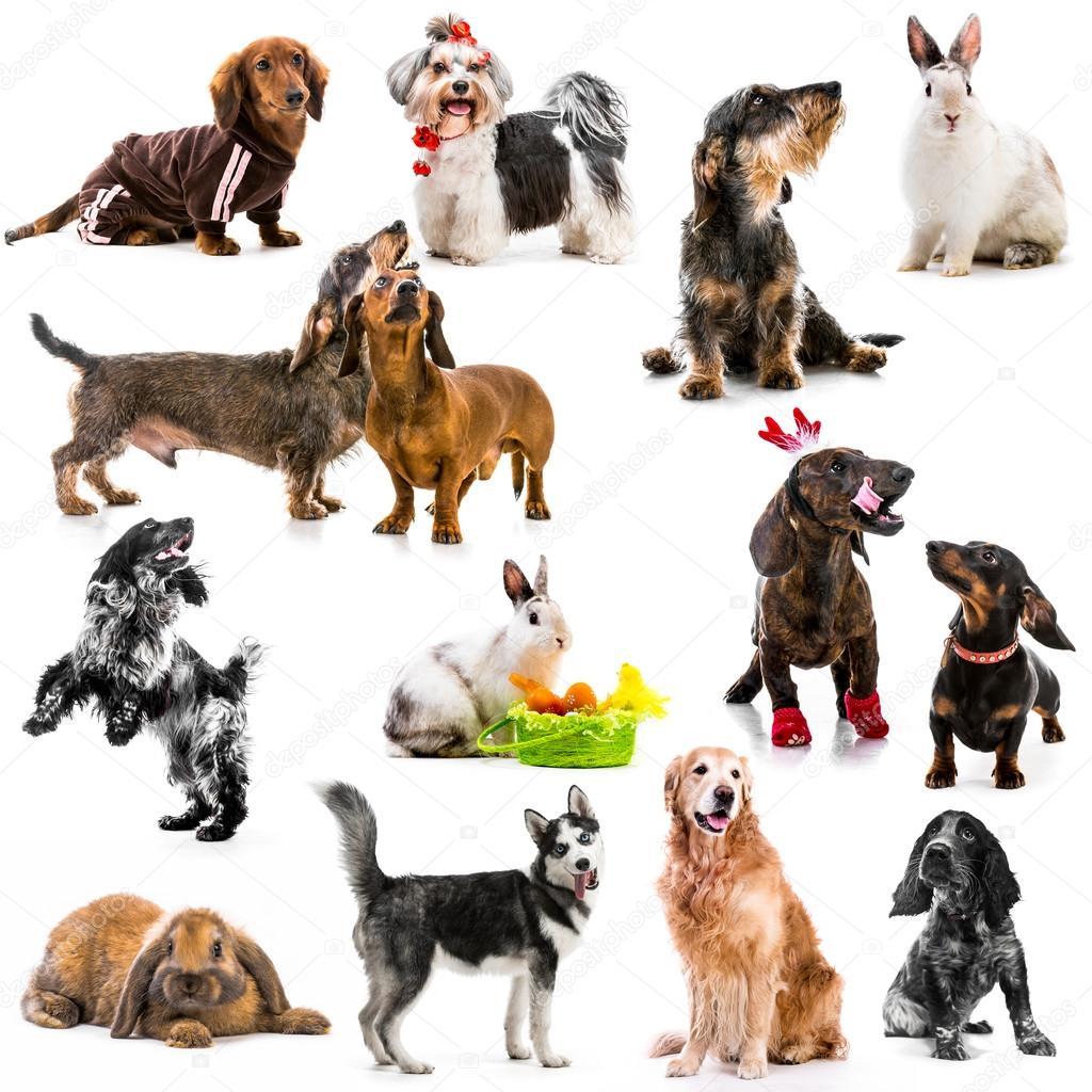 Collage di foto di animali domestici foto stock for Bloccare i piani domestici
