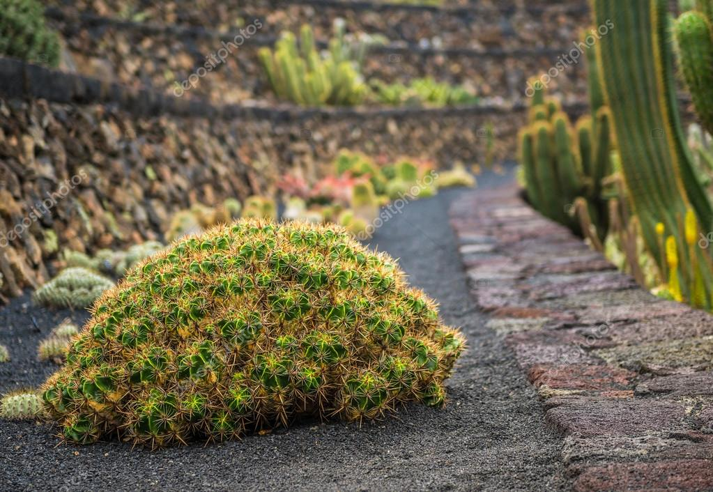 View of cactuses garden , Lanzarote