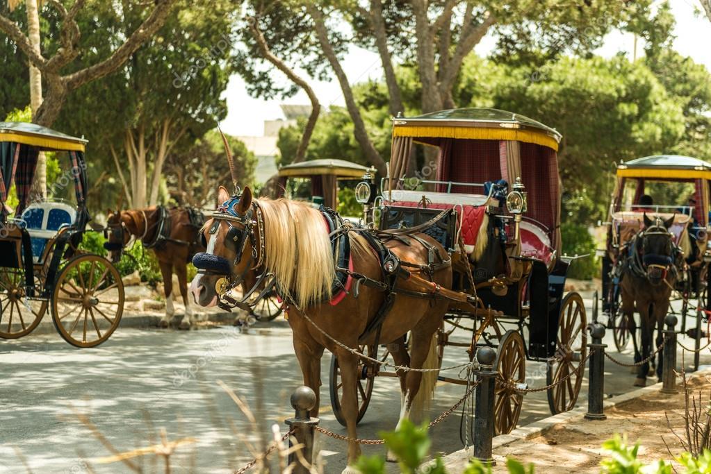 Wiersz Konia Z Wagonów W Mdinie Zdjęcie Stockowe Tan4ikk
