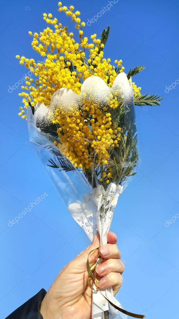 Bouquet of mimosa in hand