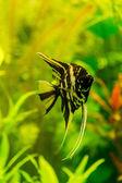 Fotografie tropické ryby