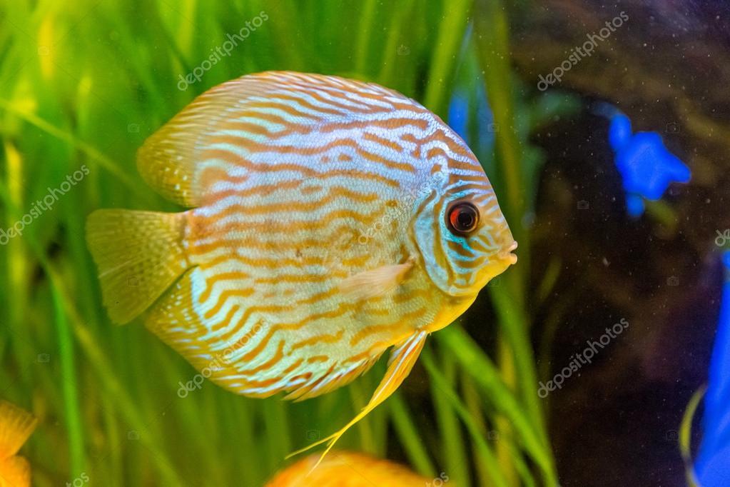 acquario con pesci tropicali foto stock bloodua 82705402