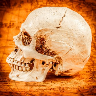 Human skull on old map stock vector