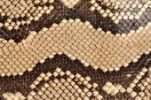 Fotografie hadí kůže