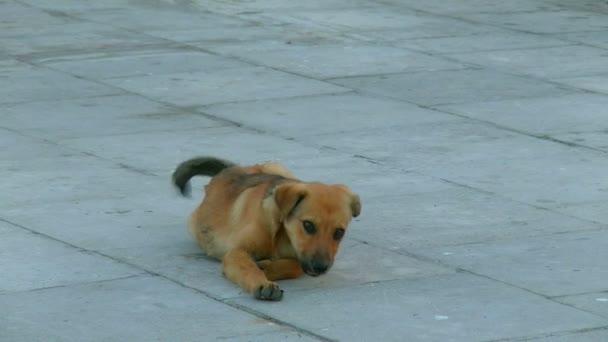 Roztomilé štěně bez domova se hraje na chodníku