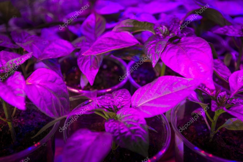 https://st2.depositphotos.com/1000664/7195/i/950/depositphotos_71956565-stockafbeelding-led-verlichting-groeien-planten.jpg