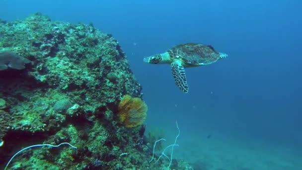 Turtle Swimming Under Water